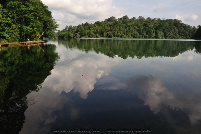 DSC_0420macritchie reservoir