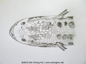 Snakehead fish Toman fishP1160322 - Internet
