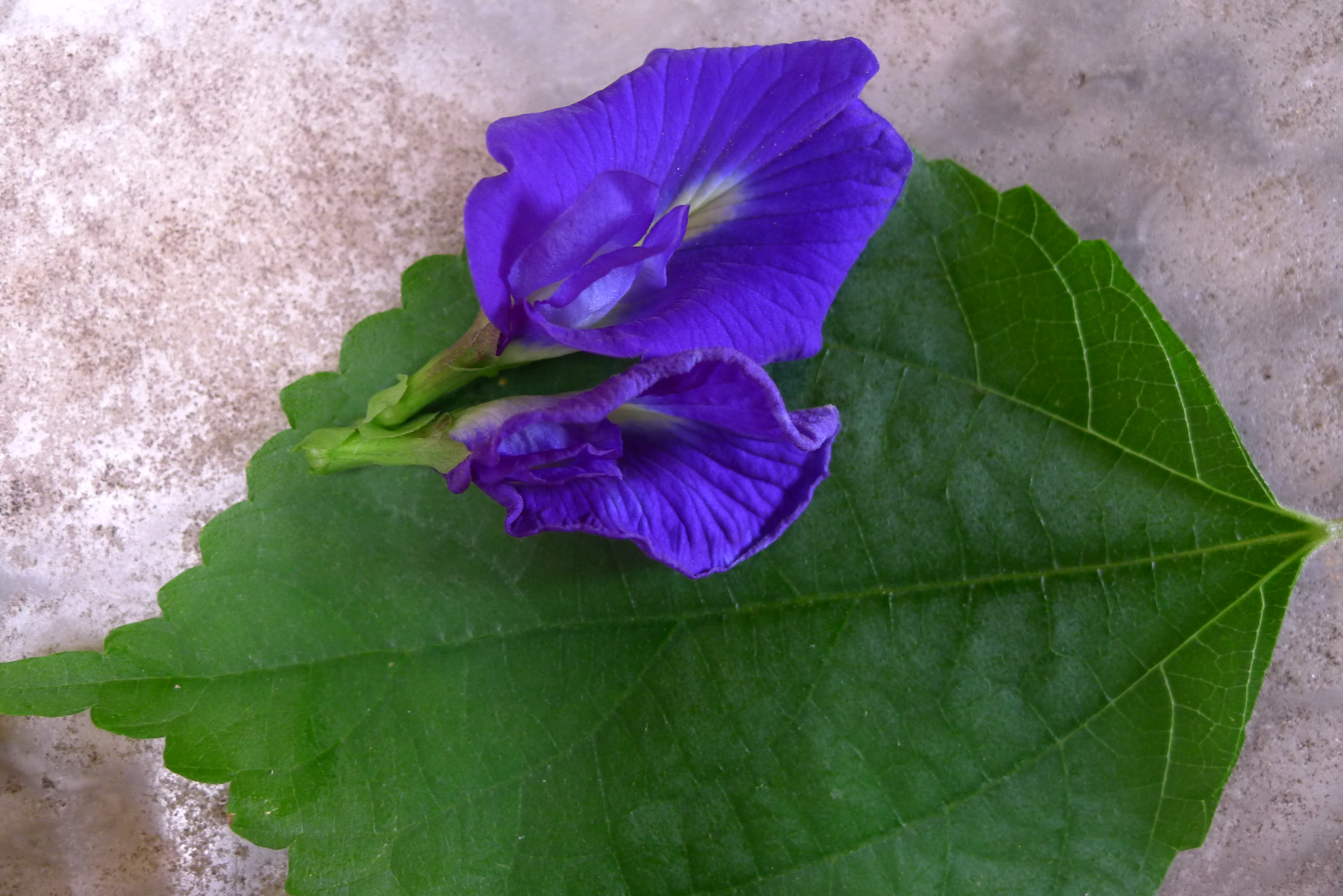 Nyonya Dumpling and butterfly pea flowers | 9 to 5 Travel Blog