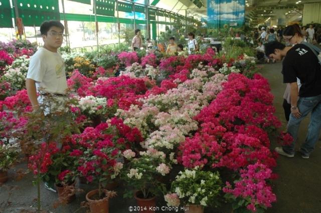 DSC_0216建國假日玉花市 Holiday Jade and Flower Market