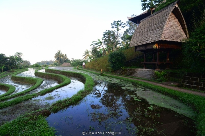 DSC_1868bali eco stay